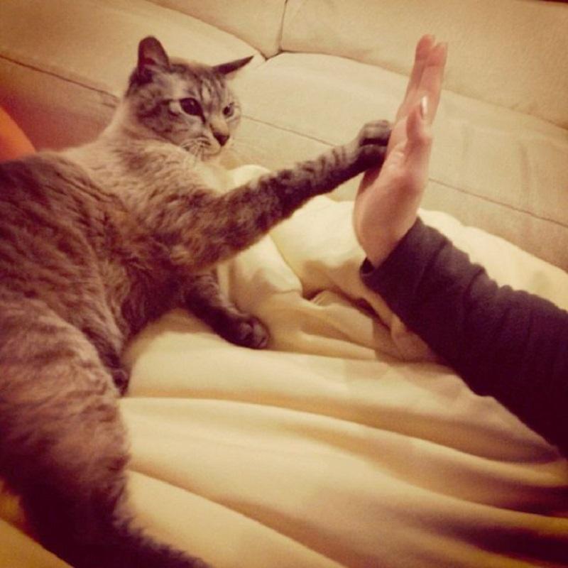 Кошки способны лечить! Вот куда нужно приложить кота, чтобы вылечиться.