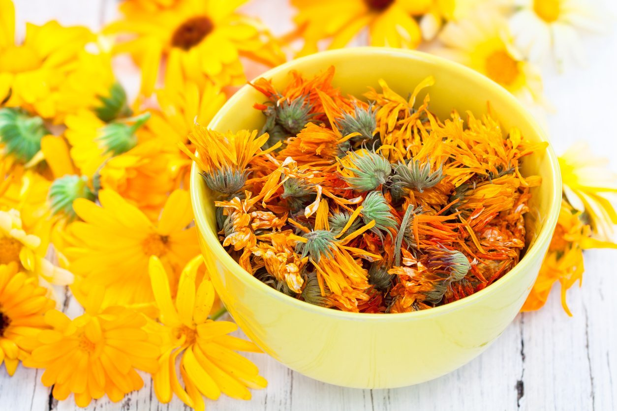 На что способны цветки календулы: ее экстракт входит в состав более 200 медицинских препаратов!