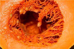 Срочно: тыква вызывает необратимые процессы в организме. Это нужно знать