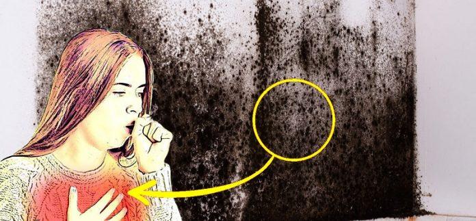 4 признака того, что в вашем доме черная плесень и как избавиться от нее