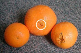 Почему я раньше не знала об этом! Теперь я внимательно выбираю апельсины