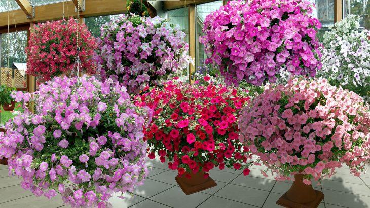 Универсальный рецепт удобрения для богатого цветения