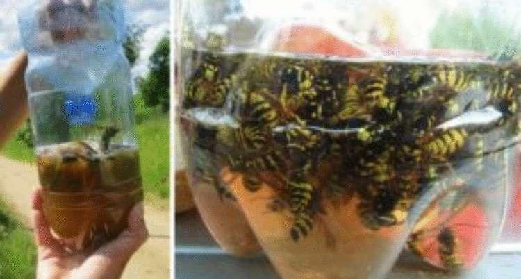 Простейшая ловушка для комаров своими руками: 5 минут, и кровососы в пролете