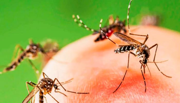 Cпособ защиты от комаров – Егерский! Когда забыл репеллент