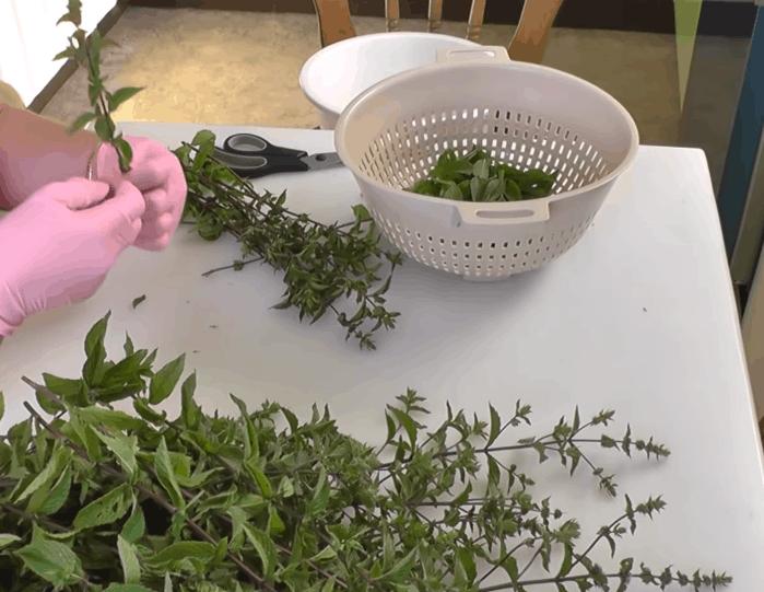 Мятный сироп на зиму: лакомство с ароматом лета