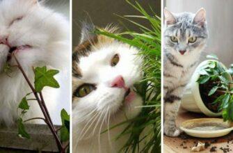 Так вот почему кот ест домашние цветы и растения.