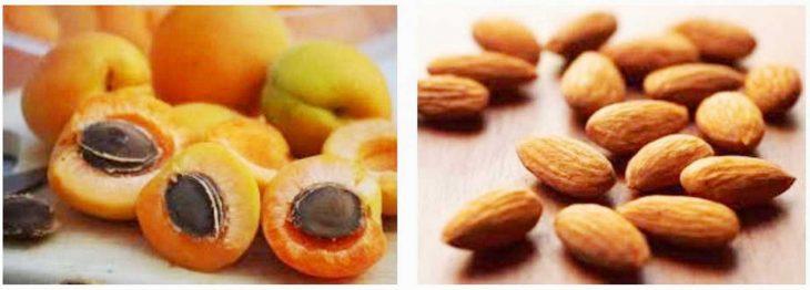 Абрикосовые косточки — лекарство для сердца, ног и бронхов. Что лечат ядрышки абрикоса.
