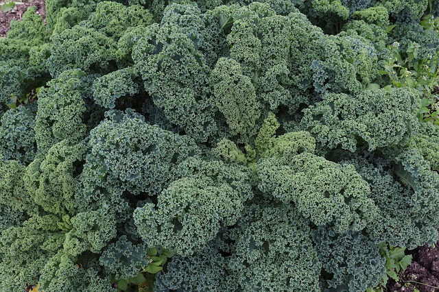 ТОП 6 продуктов, которые нужно есть осенью чтобы быть здоровыми целый год.
