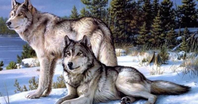 Притча про двух волков. Читается 20 секунд, а запоминается навсегда
