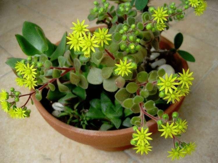 Какие комнатные растения могут принести в ваш дом тепло, уют и счастье