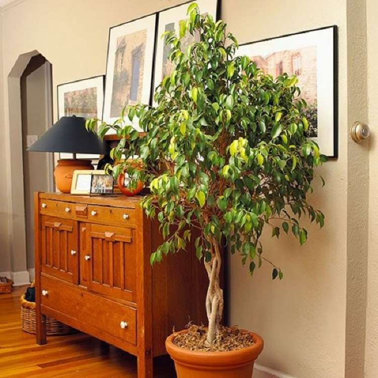 10 комнатных растений, с которыми вы вздохнёте полной грудью
