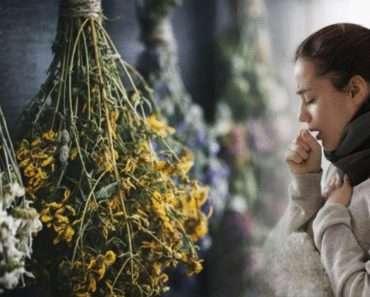 Эффективные растения для лечения и профилактики бронхита