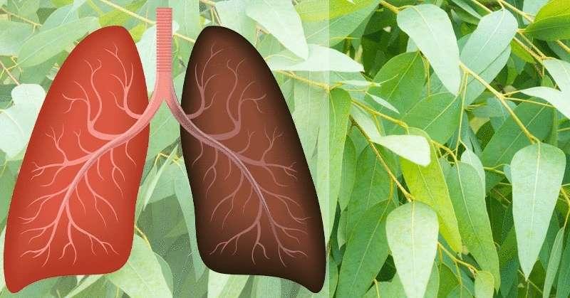 9 растений и трав, которые восстанавливают повреждение легких, борются с инфекциями и усиливают здоровье легких